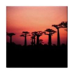 Baobabs Trees Silhouette Landscape Tile Coasters