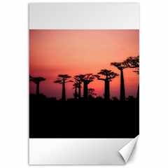 Baobabs Trees Silhouette Landscape Canvas 12  X 18