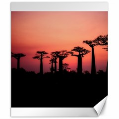 Baobabs Trees Silhouette Landscape Canvas 20  X 24