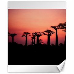 Baobabs Trees Silhouette Landscape Canvas 11  X 14