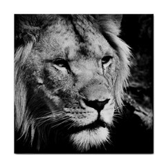 Africa Lion Male Closeup Macro Tile Coasters