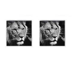Africa Lion Male Closeup Macro Cufflinks (square)