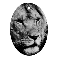 Africa Lion Male Closeup Macro Oval Ornament (two Sides)
