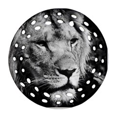 Africa Lion Male Closeup Macro Round Filigree Ornament (two Sides)