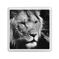 Africa Lion Male Closeup Macro Memory Card Reader (square)
