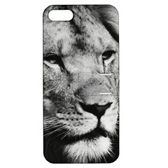Africa Lion Male Closeup Macro Apple Iphone 5 Hardshell Case With Stand