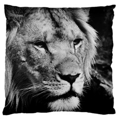 Africa Lion Male Closeup Macro Large Flano Cushion Case (one Side)