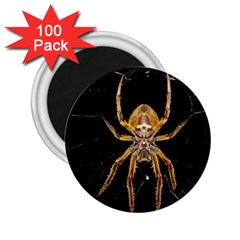 Insect Macro Spider Colombia 2 25  Magnets (100 Pack)