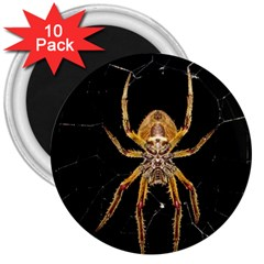 Insect Macro Spider Colombia 3  Magnets (10 Pack)