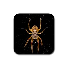 Insect Macro Spider Colombia Rubber Coaster (square)