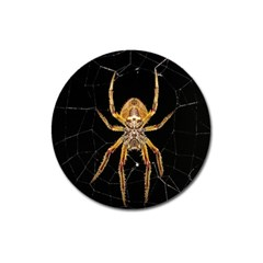 Insect Macro Spider Colombia Magnet 3  (round)