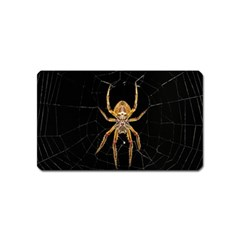 Insect Macro Spider Colombia Magnet (name Card)