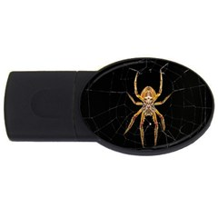 Insect Macro Spider Colombia Usb Flash Drive Oval (2 Gb)