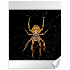 Insect Macro Spider Colombia Canvas 18  X 24
