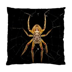 Insect Macro Spider Colombia Standard Cushion Case (one Side)