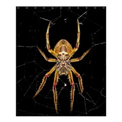 Insect Macro Spider Colombia Shower Curtain 60  X 72  (medium)