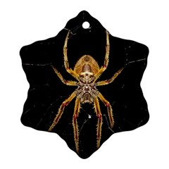Insect Macro Spider Colombia Ornament (snowflake)