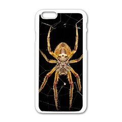 Insect Macro Spider Colombia Apple Iphone 6/6s White Enamel Case