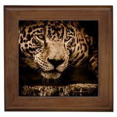 Jaguar Water Stalking Eyes Framed Tiles