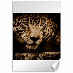 Jaguar Water Stalking Eyes Canvas 12  X 18
