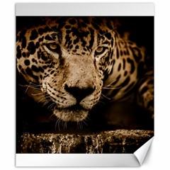 Jaguar Water Stalking Eyes Canvas 20  X 24