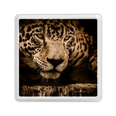 Jaguar Water Stalking Eyes Memory Card Reader (square)
