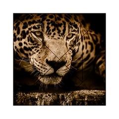 Jaguar Water Stalking Eyes Acrylic Tangram Puzzle (6  X 6 )