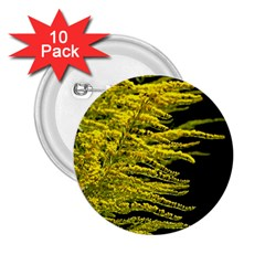 Golden Rod Gold Diamond 2 25  Buttons (10 Pack)