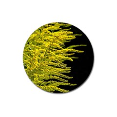Golden Rod Gold Diamond Magnet 3  (round)