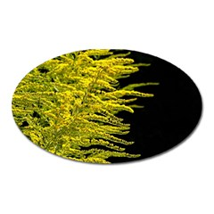 Golden Rod Gold Diamond Oval Magnet