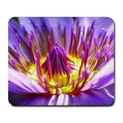 Flower Blossom Bloom Nature Large Mousepads