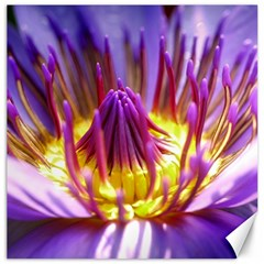 Flower Blossom Bloom Nature Canvas 20  X 20