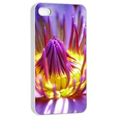 Flower Blossom Bloom Nature Apple Iphone 4/4s Seamless Case (white)