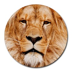 Africa African Animal Cat Close Up Round Mousepads