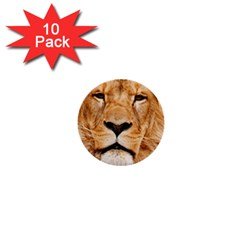 Africa African Animal Cat Close Up 1  Mini Buttons (10 Pack)