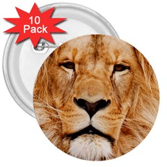 Africa African Animal Cat Close Up 3  Buttons (10 Pack)