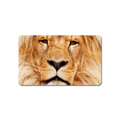 Africa African Animal Cat Close Up Magnet (name Card)