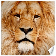 Africa African Animal Cat Close Up Canvas 16  X 16