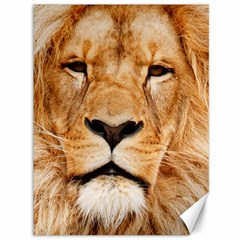 Africa African Animal Cat Close Up Canvas 36  X 48