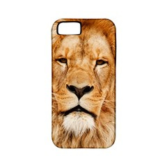 Africa African Animal Cat Close Up Apple Iphone 5 Classic Hardshell Case (pc+silicone)