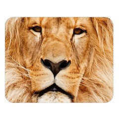 Africa African Animal Cat Close Up Double Sided Flano Blanket (large)