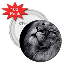 Feline Lion Tawny African Zoo 2 25  Buttons (100 Pack)