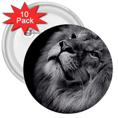 Feline Lion Tawny African Zoo 3  Buttons (10 Pack)