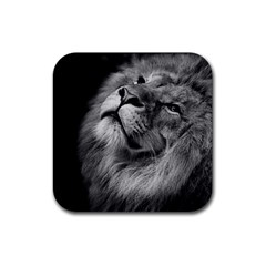 Feline Lion Tawny African Zoo Rubber Square Coaster (4 Pack)