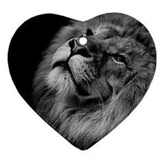 Feline Lion Tawny African Zoo Heart Ornament (two Sides)