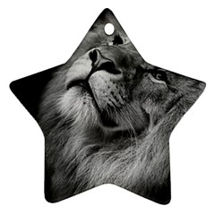 Feline Lion Tawny African Zoo Star Ornament (two Sides)
