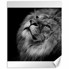 Feline Lion Tawny African Zoo Canvas 16  X 20