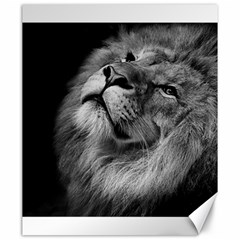 Feline Lion Tawny African Zoo Canvas 20  X 24
