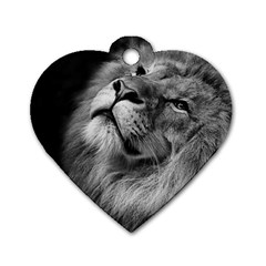 Feline Lion Tawny African Zoo Dog Tag Heart (one Side)