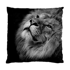 Feline Lion Tawny African Zoo Standard Cushion Case (two Sides)